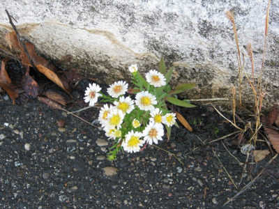 flowers_in_concrete_2.jpg