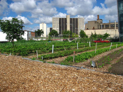 800px-north_view_of_a_chicago_urban_garden.jpg