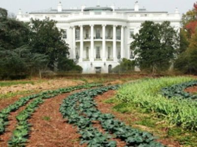 whitehousegarden.jpg
