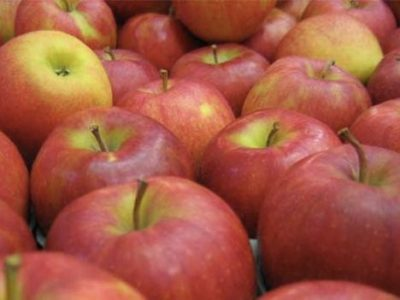apples-for-store.jpg