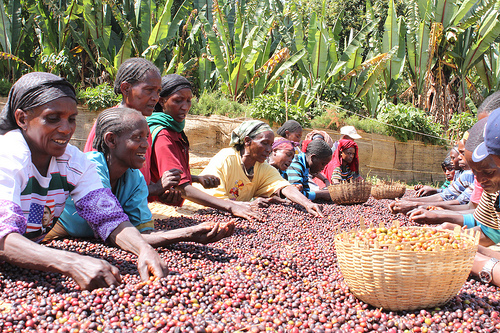 Ethiopian coffee co-op workers. Photo by counterculturecoffee on Flickr.