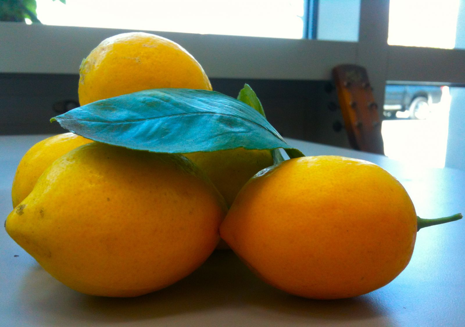 The day's bounty: lemons from down the road. Lemons and green tea are a powerful vice.