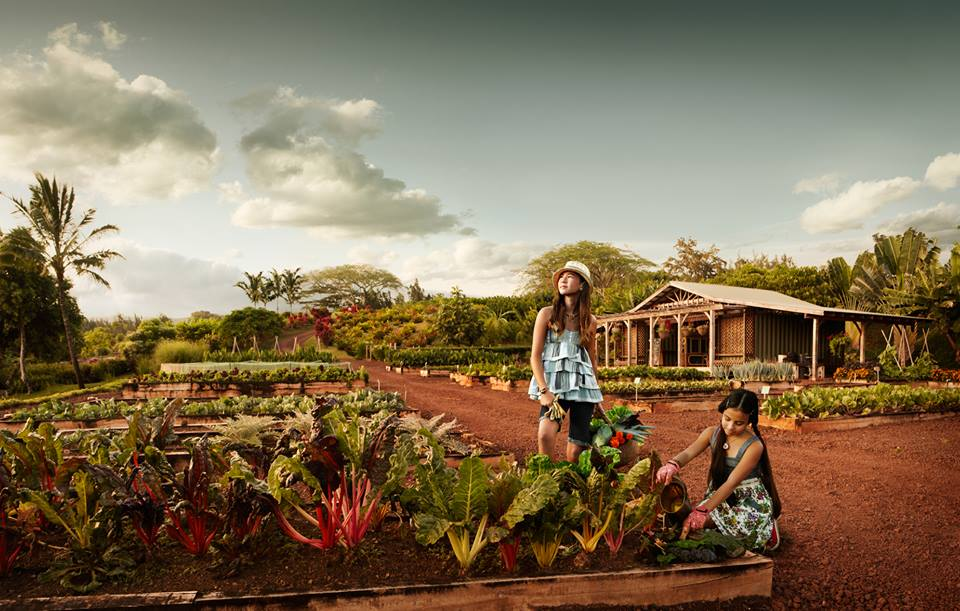 the Upcountry Farm allows members to plunge their hands into the stunning red earth