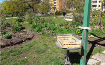 One of Stockholm's new urban gardening commons