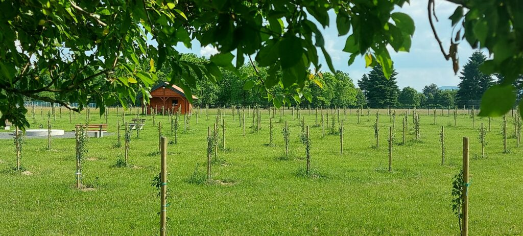 community orchard in coratia with green fields and sprouting trees